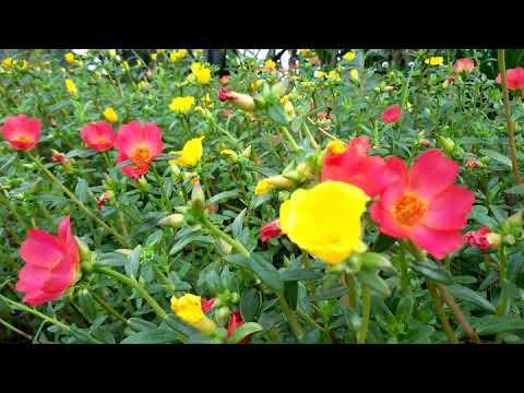 Unduh 95+ Gambar Bunga Jam 9 Keren Gratis