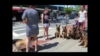 The Ultimate German Shepherds!!