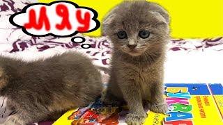 Котята учат азбуку - папа не знает что делать.  Что то пошло не так и странный котенок