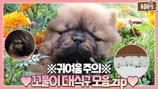 귀여움으로 레전드💥 찍어버린 사고뭉치 💖꼬물이 대가족 모음.zip💖 I TV동물농장 (Animal Farm) | SBS Story