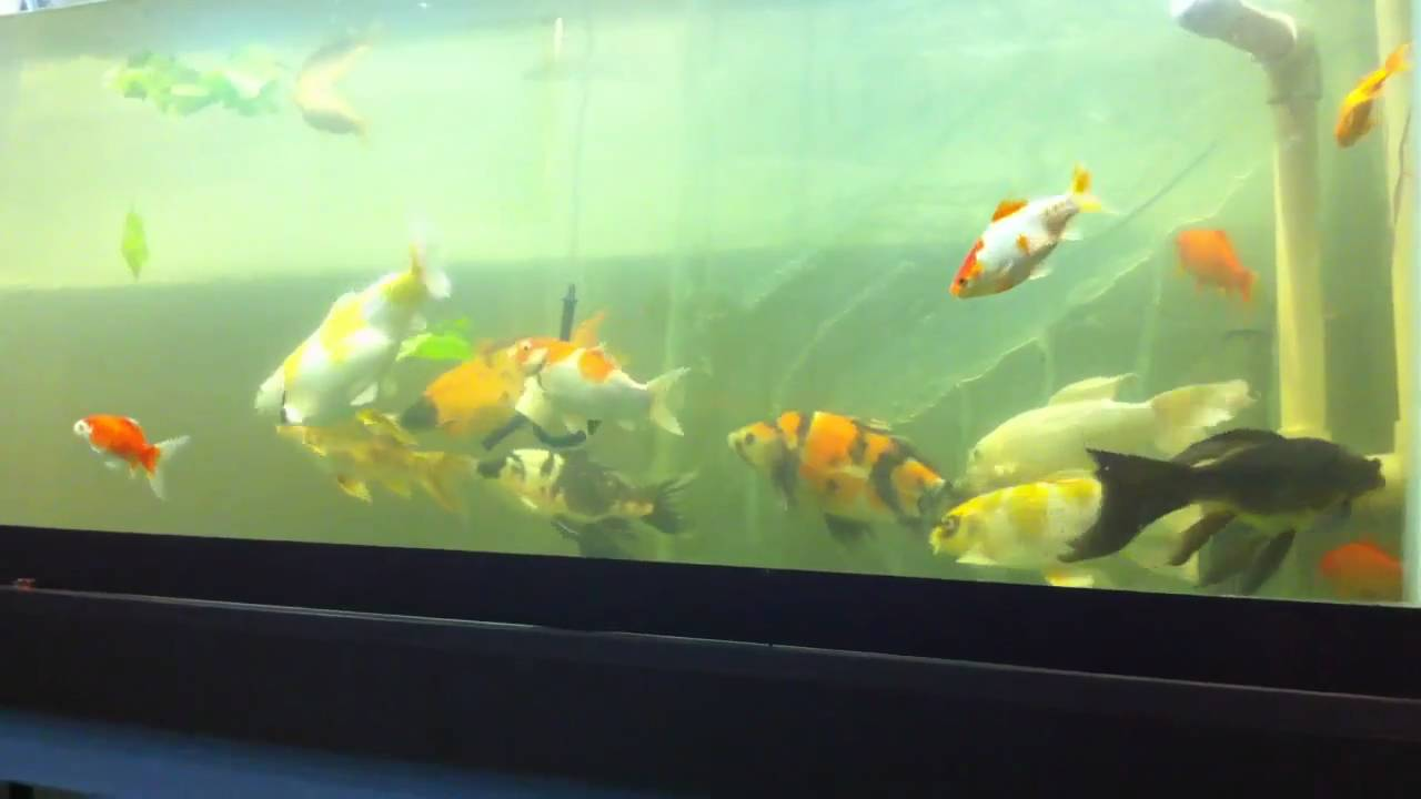 Cheap 200 gallon fish tank youtube for Youtube fish tank