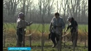 Садоводы используют новые методы обрезки деревьев(, 2014-03-25T08:04:56.000Z)