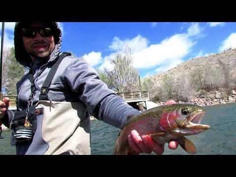 Fly Fishing The ARKANSAS RIVER!!