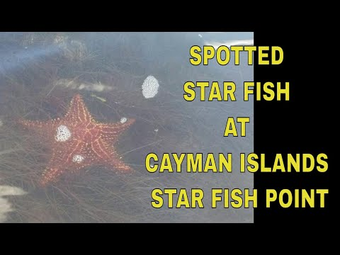 ATTRACTIONS OF CAYMAN ISLANDS - STAR FISH POINT