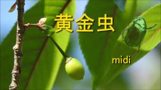 【童謡】黄金虫【こがねむし】 midi