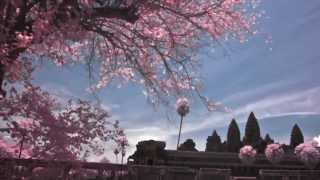 Infrared Photography: The Angkor Wat