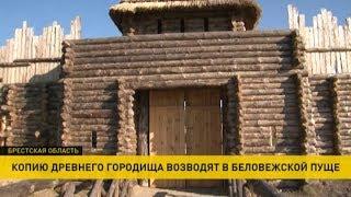 Копию древнего городища начали строить в Беловежской пуще