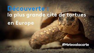 Découverte : la plus grande cité de tortues en Europe