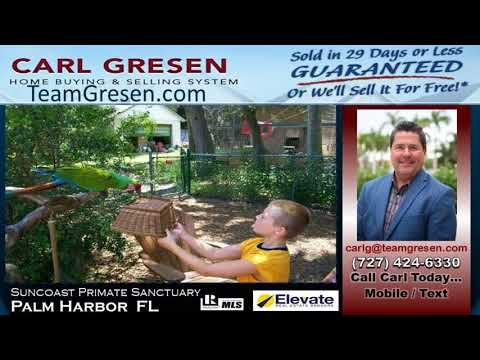 Looking for the best Real Estate Agent inPalm Harbor Florida