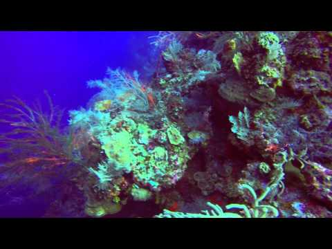 Grand Turk scuba diving