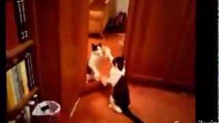 Животные против зеркала. Animals vs Mirrors Compilation