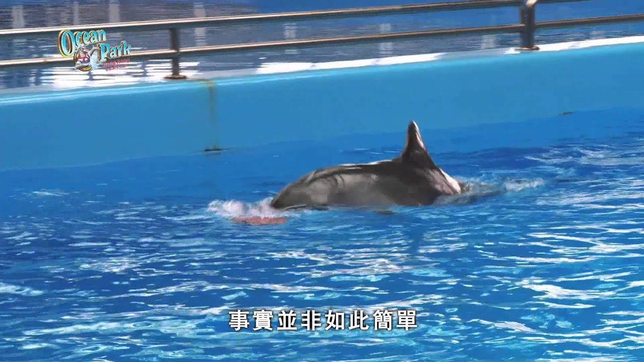 海洋公園好戲在後臺第八集 -- 海豚老友記(上集) (HD 1080) - YouTube