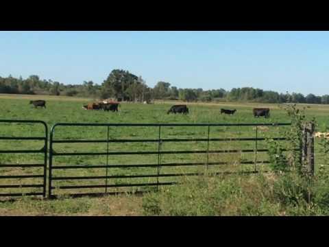 Thorpe Farm 9/10/16