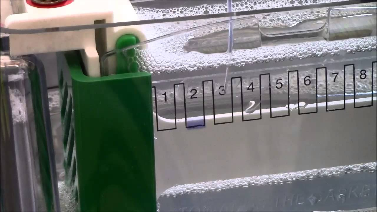 SDS PAGE 2: Gel Loading Practice - YouTube