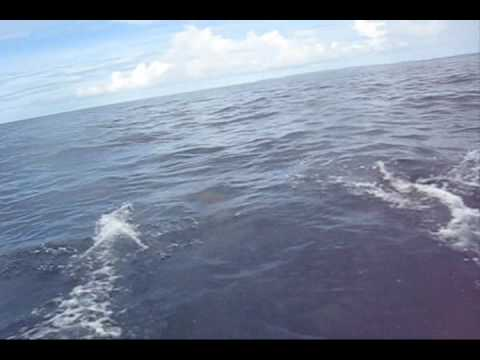 2009.04.21 Palau Dolphin ??????
