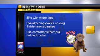 Train Your Dog For Bike Rides