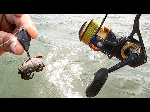 Fishing Live Crabs On Ocean Reefs For Sweet Multi-Species Action!!