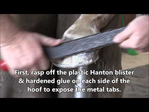 How To Easily Remove Hanton Glue-On Horseshoes