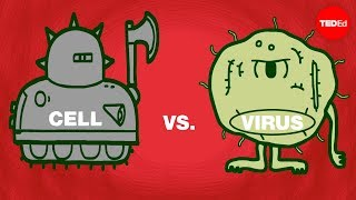 Cell vs. virus: A battle for health  Shannon Stiles