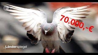 Sinnlos! 70.000 Euro für leeres Taubenhaus