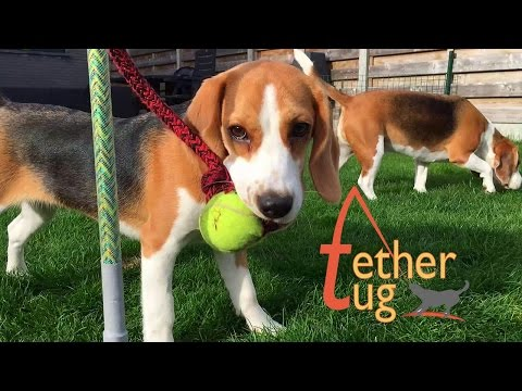 Funny Dog Toy Critics 'Louie and Marie' Episode #11 : ' TETHER TUG '