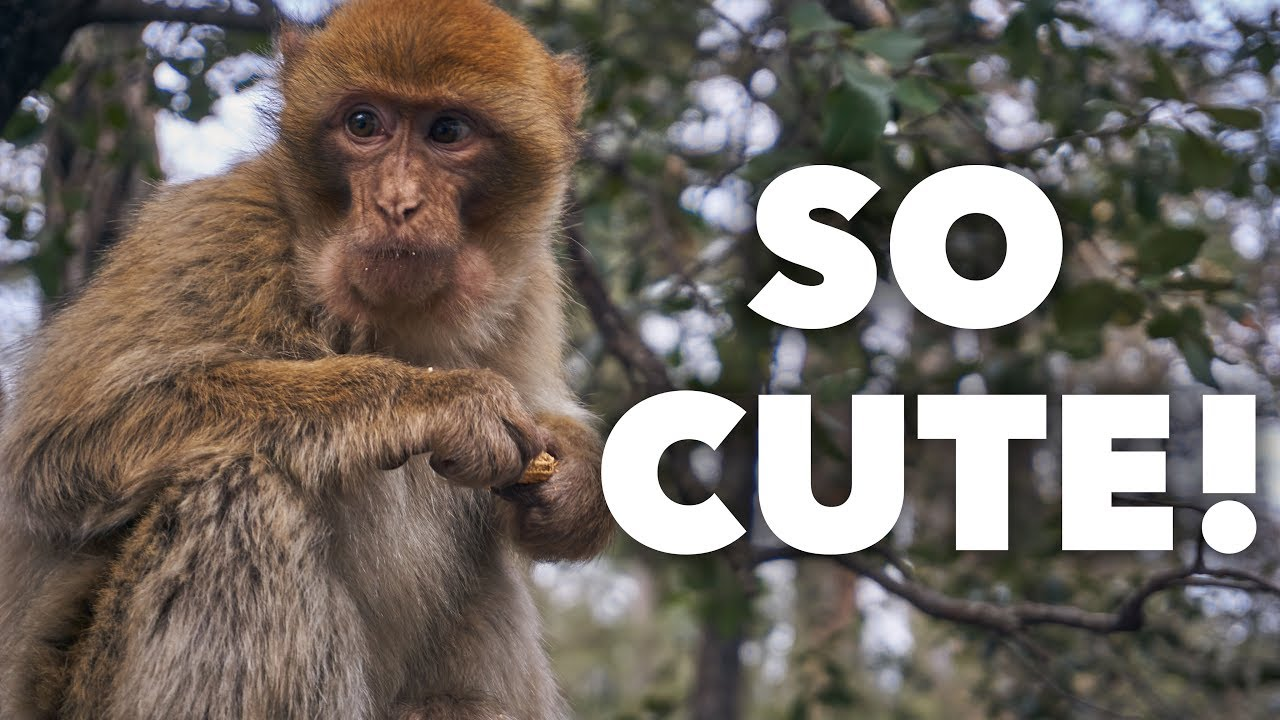 Monkeys In Morocco! Travel Tuesday #3