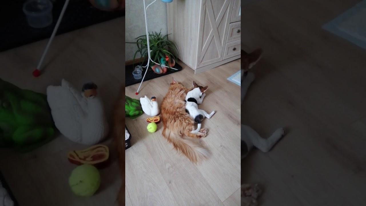 Видео без звука но так мило. Собака и кошка. - YouTube