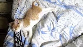 Котенок жив и выздоравливает ! VLOG