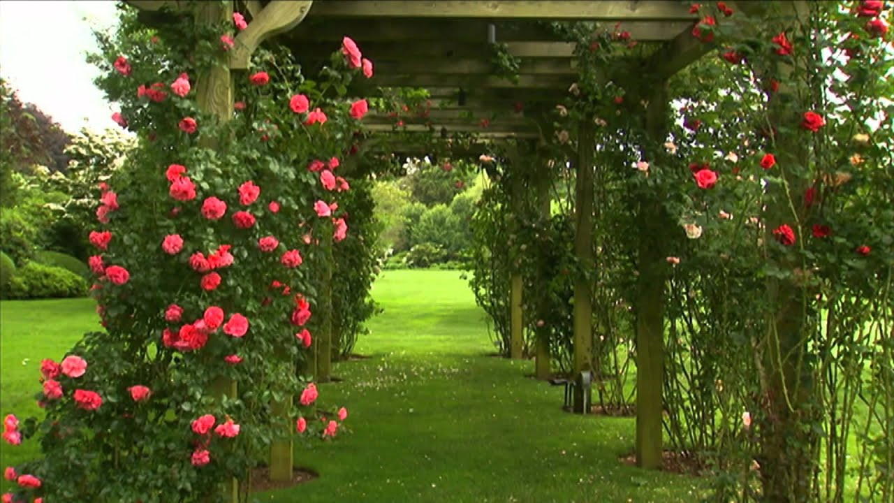 How To Grow Roses P Allen Smith Classics Youtube