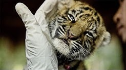 Top 10 Ways To Protect Endangered Species