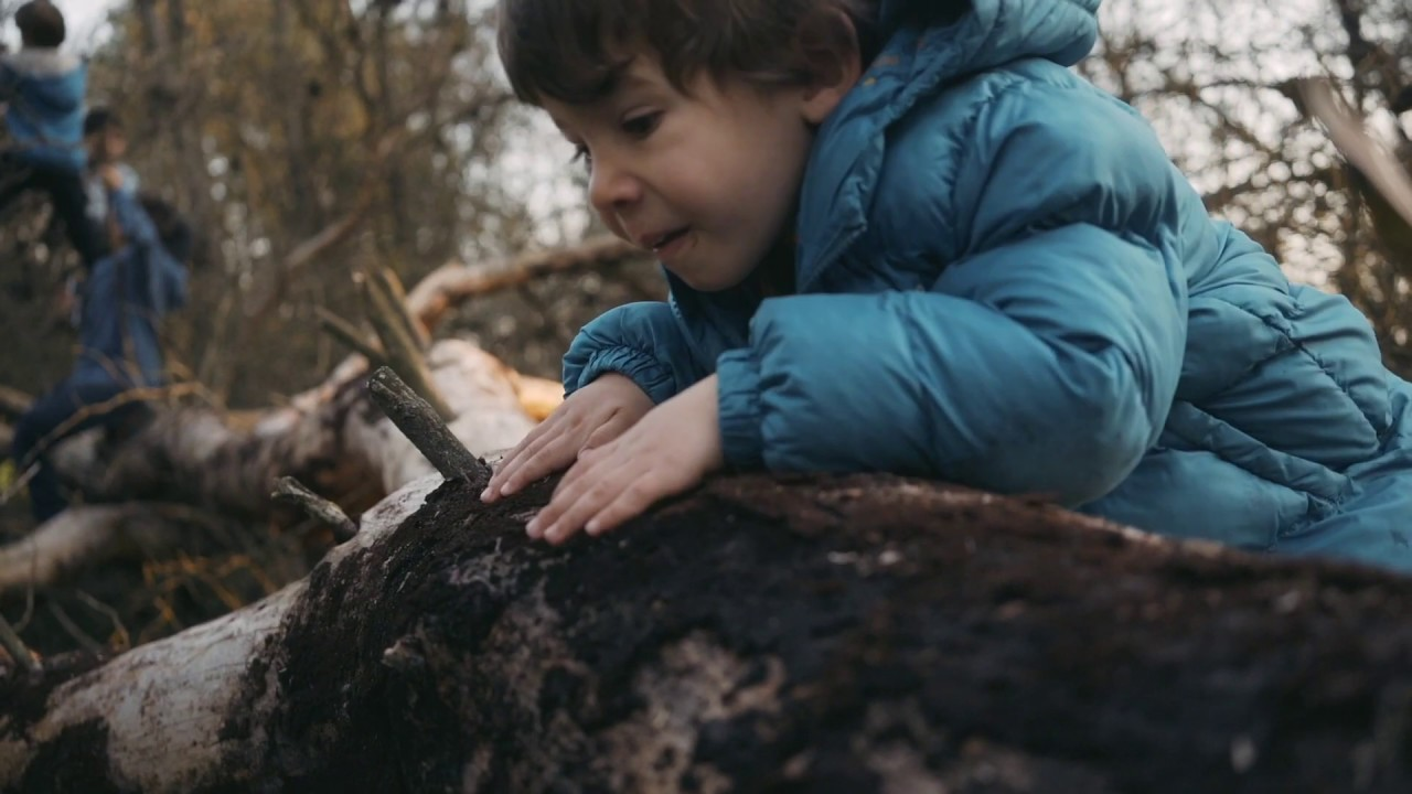 WILD FOREST - ÉS HORA DE TORNAR A POSAR ELS PEUS A TERRA