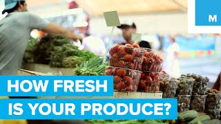 How Long Are Fruits and Vegetables Stored Before You Buy Them? - Sharp Science