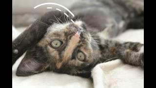 Необычный котенок ищет теплый дом