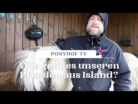 Wie geht es unseren Pferden aus Island? Einen Monat nach dem Import