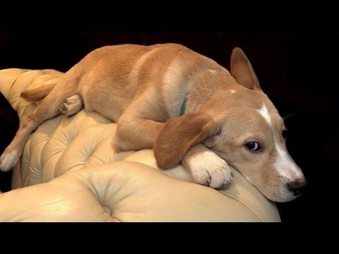 le premier bar chiens en europe ouvre lille youtube. Black Bedroom Furniture Sets. Home Design Ideas