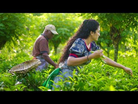Ceylon Tea Recipe (Homemade Tea) | World Famous Sri Lankan Secret! | Poorna - The nature girl