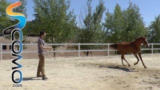 Trabajo a la cuerda con caballos