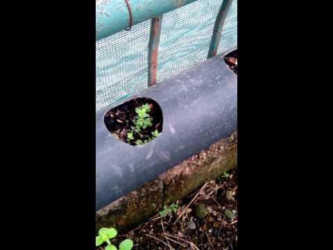 Marbea Organic Garden - Small Space Gardening