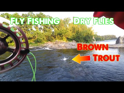 Ep.126. Fly Fishing The Kennebec River With Dry Flies For Trout And Salmon.