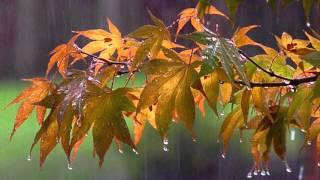 Октябрь Природа средней полосы России