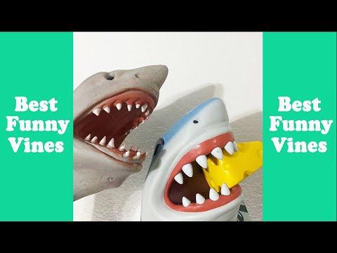 Funny Shark Puppet Funny Compilation 2020 (W/Titles) Best Shark Puppet Vine Videos