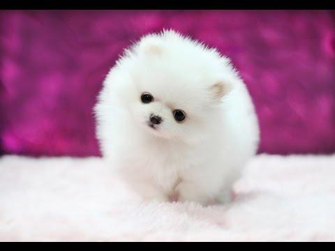 как называется порода маленьких собачек