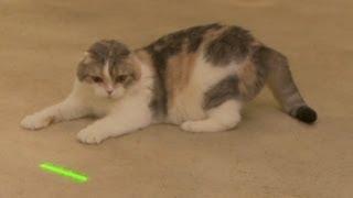 Fat Cat Turns Into Lion Cat