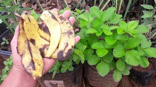 Aprenda a Utilizar a Casca de Banana Para Adubar Suas Plantas