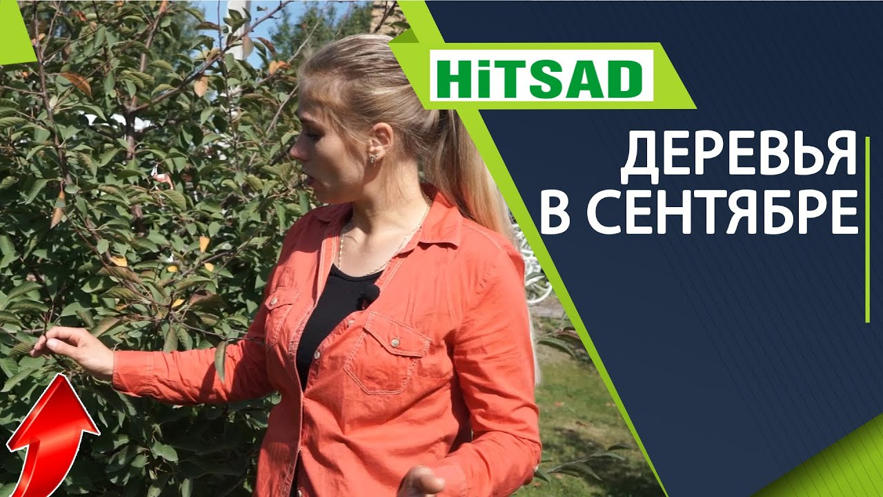 Деревья в сентябре ✔️ Чем обработать сад от вредителей ✔️ Какие деревья обрезать осенью
