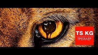 Зоопарк (Zoo) - трейлер