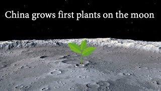 चांद पर कपास का पेड़ उगाकर चीन ने रचा इतिहास| Cotton sprouts are the first plant to grow on the moon|
