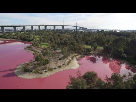 BLOOD RED WATERS AROUND THE WORLD - UPDATES (NEW AND OLD)