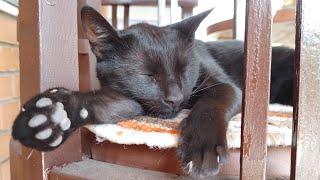 Relaxing Cat Video 168