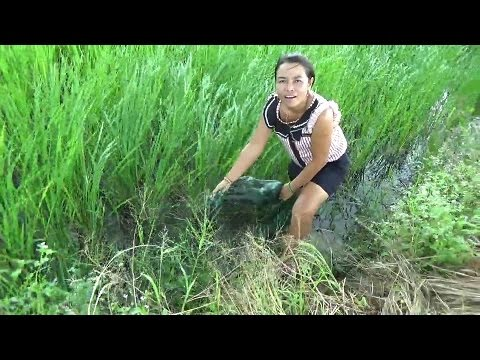 Living off the land in Rural Thailand, Fishing in the rice paddy